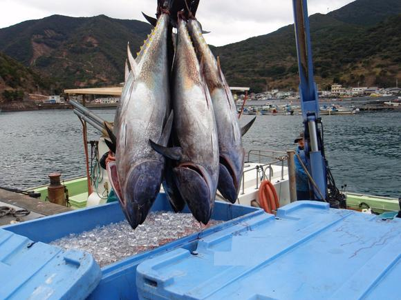 インドネシア人船員が活躍する日本のマグロ漁船